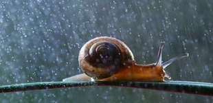 Slugs and snails, after rain, appear like ghosts in the night