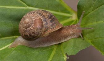 Orchard Agrikem - Snail and Slug Species